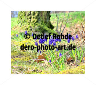 Early spring - DeRo Photo Art