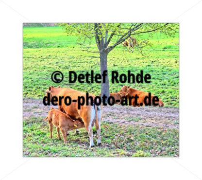 Maternity - DeRo Photo Art