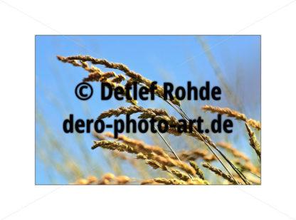 No green grass - DeRo Photo Art