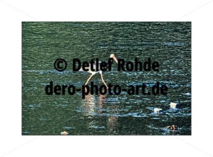 Schwarzstorch - DeRo Photo Art
