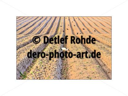 Stork in the field - DeRo Photo Art