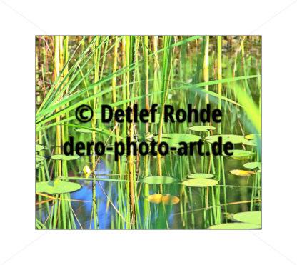 hidden frog - DeRo Photo Art