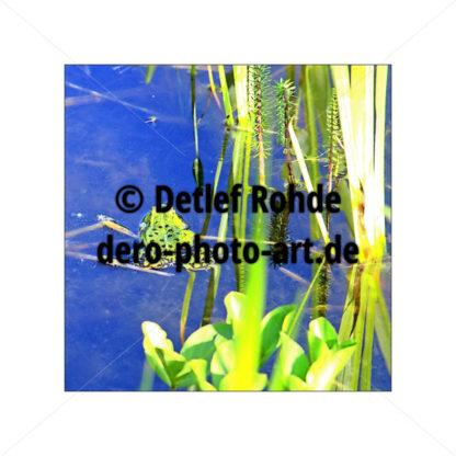 leaving frog - DeRo Photo Art